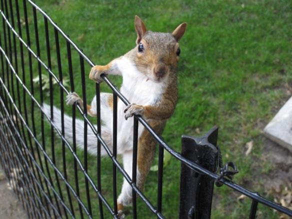 NYCsquirrel